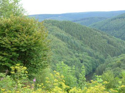 Ardennen view